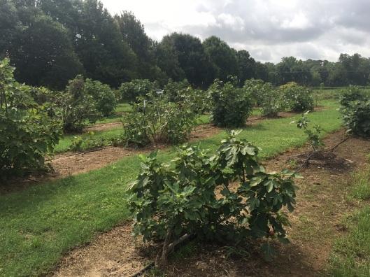 fig plots 1