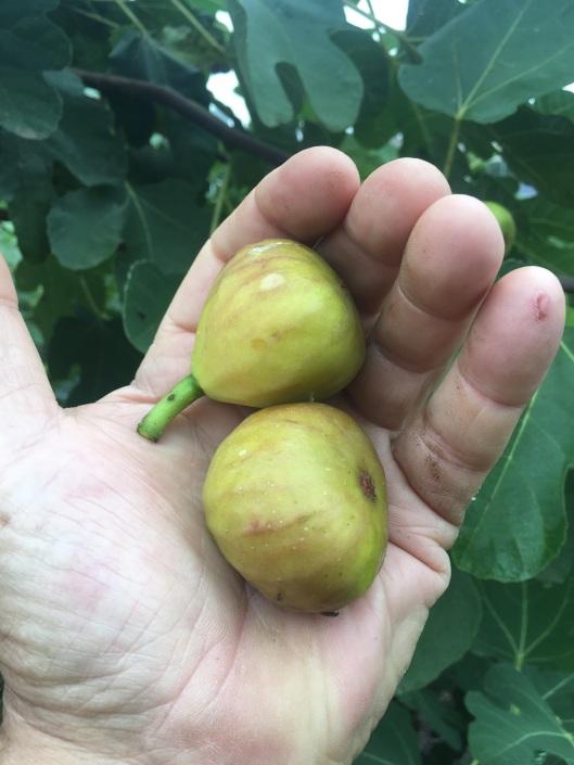 fig plots 2