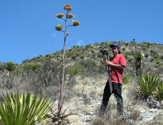 152-agave-scabra-6-14-06