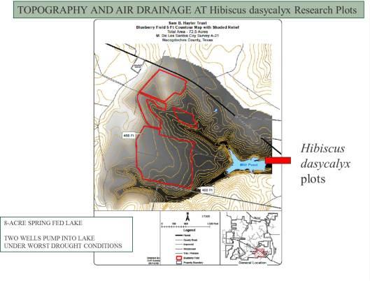 Hibiscus dasycalyx 9