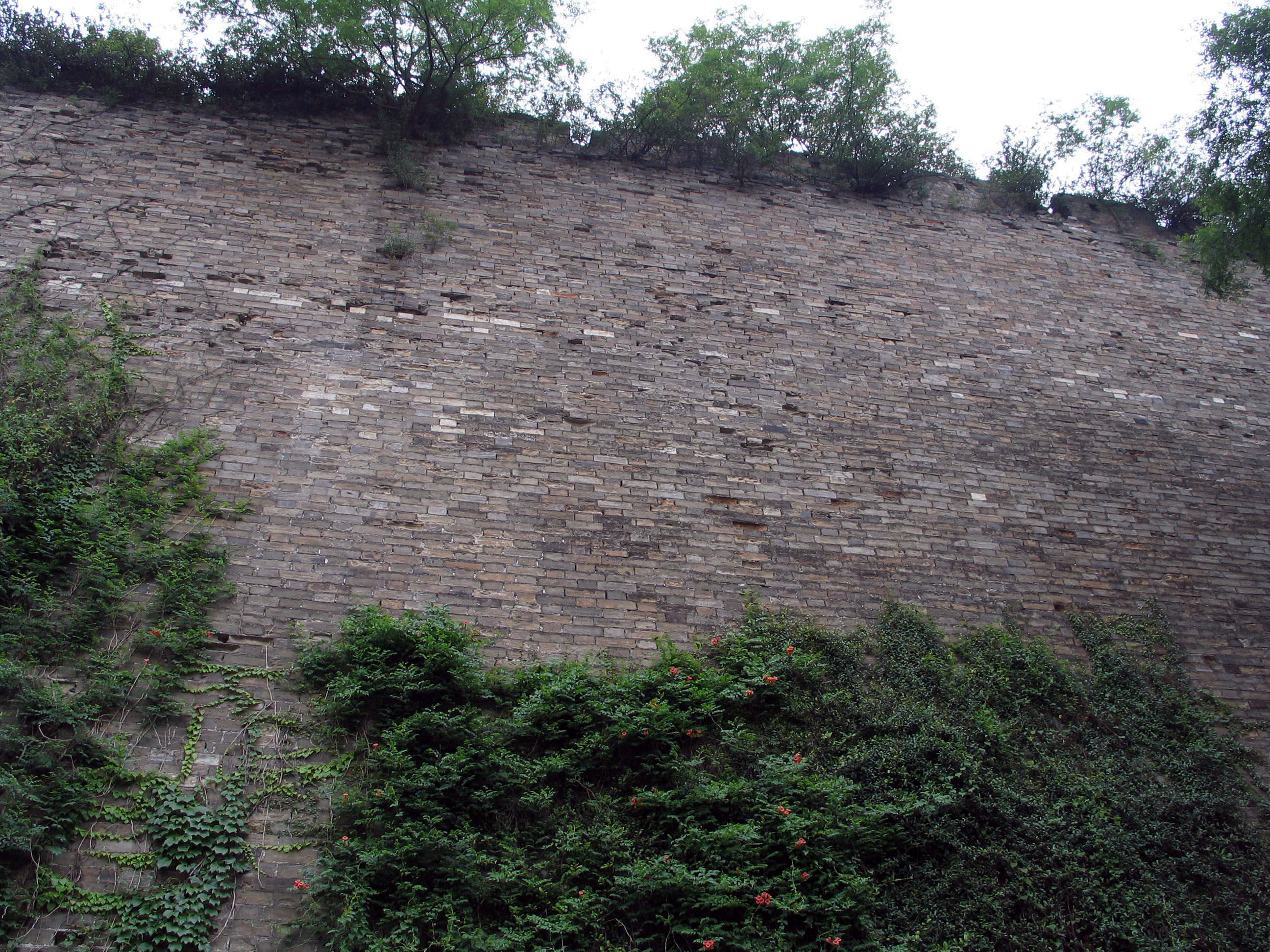 Campsis radicans Nanjing China wall 04-06-04