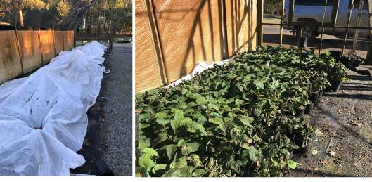 kiwfruit container freeze protection